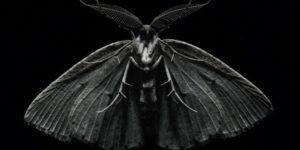 Бабочка черной моли.