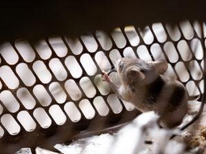 Живут ли мыши в минвате.
