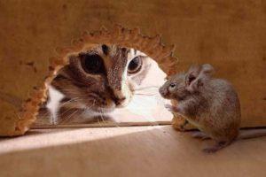 Как избавиться от запаха мышей.