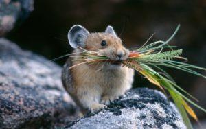 Как избавиться от мышей на даче.
