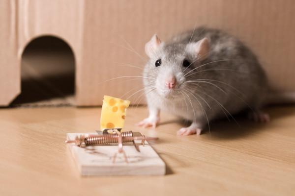 Ловушки для мышей.