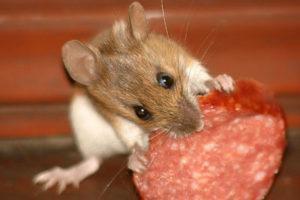 Что любят мыши.