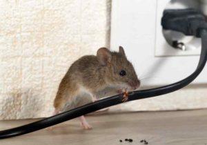 Как избавиться от мышей.