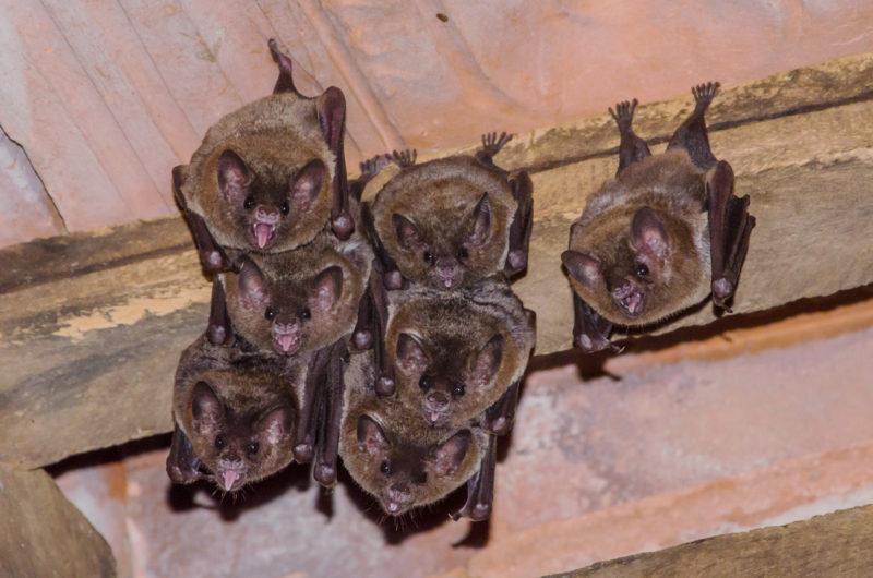 Летучие мыши - ночные животные.