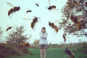 Чего боятся осы.