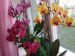 Вредители орхидеи.