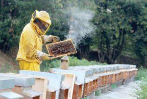 Почему пчела умирает после укуса.