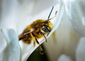 Когда пчёлы ложатся спать.