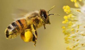 Спят ли пчелы.
