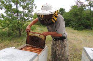 Как избавится от земляных пчел.