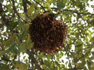 Где живут осы.