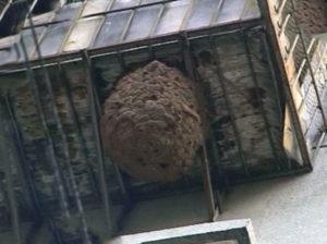 Как избавиться от ос на балконе.