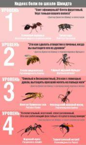 У кого есть жало: осы или пчелы.