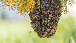 Чем отравить пчёл.