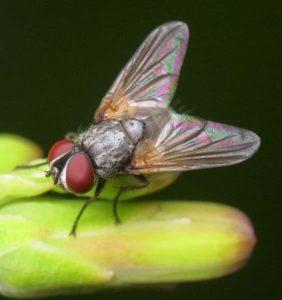 Домашние насекомые.