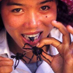 Польза от пауков.
