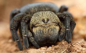 Для чего нужны пауки.