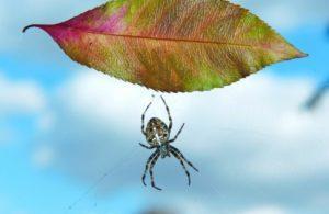 Для чего полезны пауки.