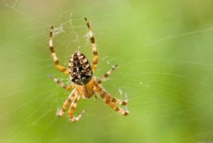 Как избавиться от пауков на даче.