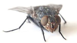 Вредители насекомые.