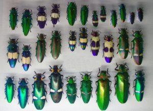 Какие насекомые одомашнились человеком.
