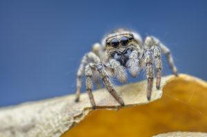 Средство от пауков в доме.