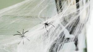 Домашние пауки.