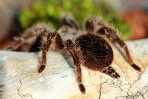 Сколько живут пауки в домашних условиях.