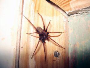 Откуда берутся пауки.