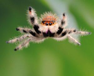 Сколько живет паук.