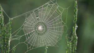 Откуда у паука паутина.