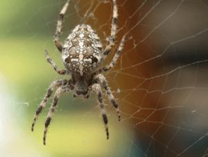 Астраханские пауки.
