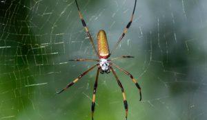 Виды пауков.