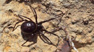 Ядовитые пауки Самарской области.