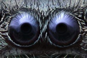 Глаза паука: фото.