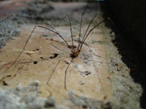 Сколько лап у паука.
