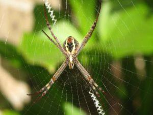 Как паук плетет паутину.