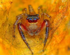 Глаза пауков.