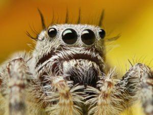 Сколько глаз у паука.