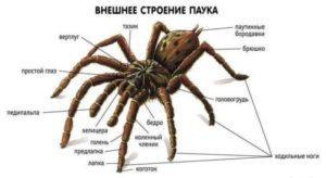 Ножки паука.
