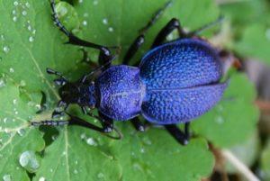 Что едят жуки.