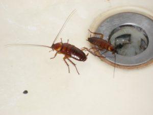 Откуда берутся тараканы в квартире.