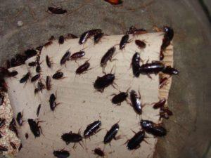 Что делать если от соседей ползут тараканы.