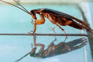 Как появляются тараканы.