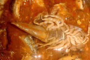 Морской таракан: фото.