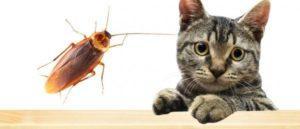 Кто ест тараканов.