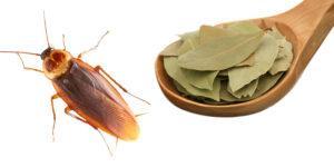 Лавровый лист от тараканов.
