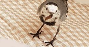 Птицы - охотники на тараканов.