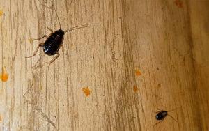 От соседей лезут тараканы: что делать.