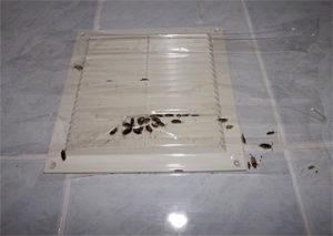 От соседей ползут тараканы.
